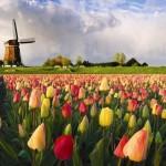 Holland tájkép