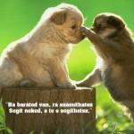 Barátság!