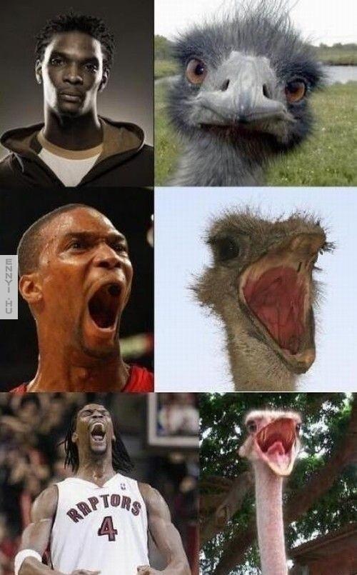 Chris-Bosh-Ostrich