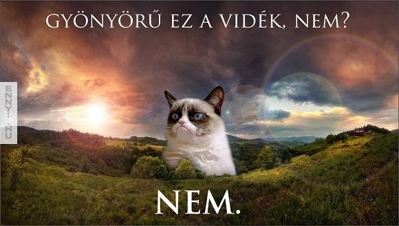 NEM copy