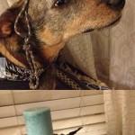 Egy profin egyensúlyozó kutya!