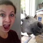 Benézett a ló az ablakon :)