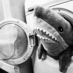 Cápa támadás :D