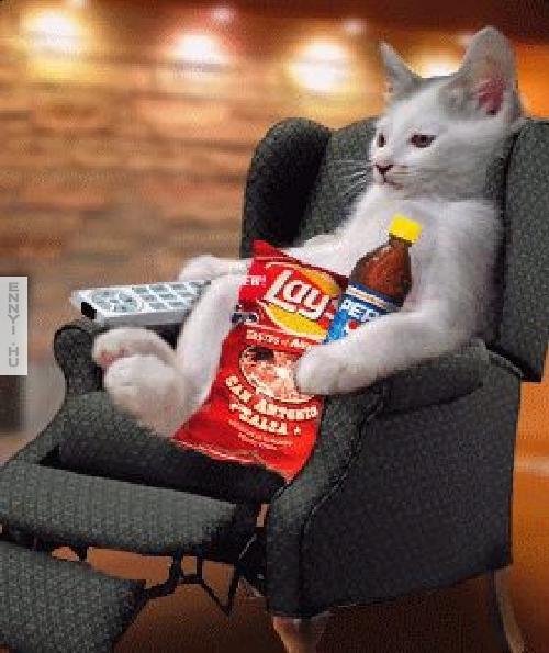 egy macskanak tudni kell elni