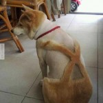 Fantáziadús kutyakozmetika :D