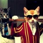 Gengszter cat