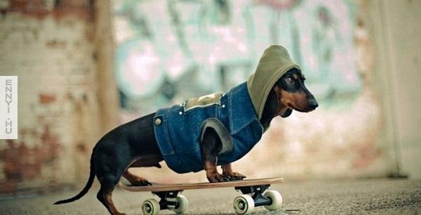 grappige-fotos-van-honden-11