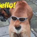 Hello, segg