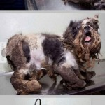 Helyrehozták a kutyust