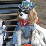 Hippi kutya