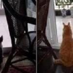 Kiccica és nagy cica