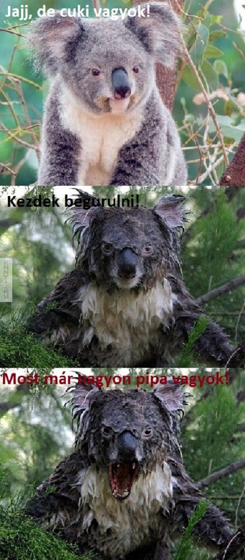 koalaorulet