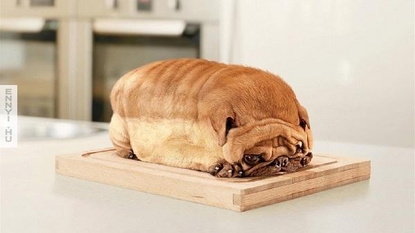 kutya vagy kenyer