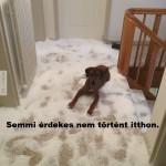 Kutyát egyedül hagyni otthon?