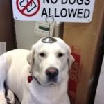 Kutya nem engedélyezett!