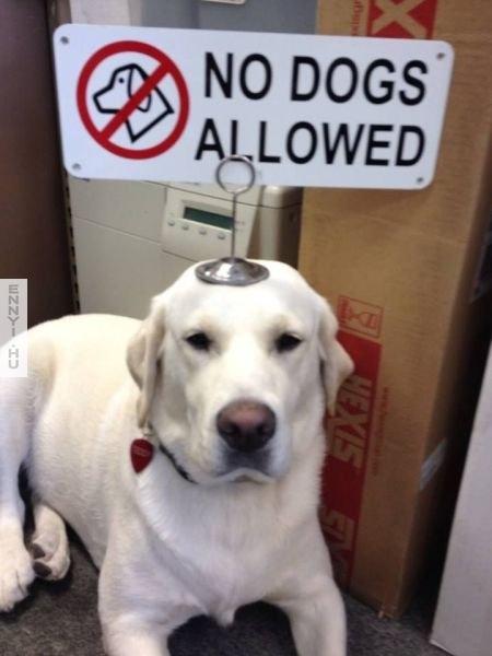 kutyanemjohet