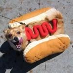 Hotdog, kutyaruha…