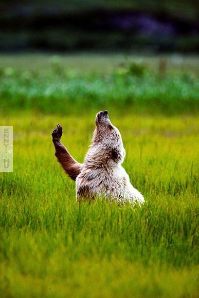lake-clark-national-park-bear-cub_51251_600x450