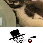 Macskabajusz, profin