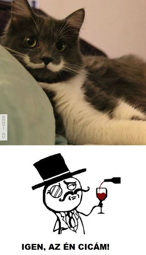 macskabajusz