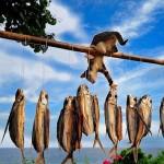 Macska horgászat