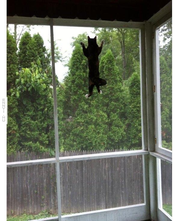 macskapokember