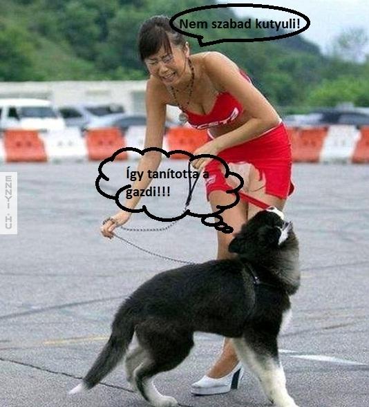 makrancos kutya