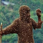 Méh viselő verseny, kb. 50 kg méh (Kína)