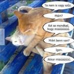 Miaúú!