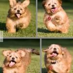 Ilyen egy boldog kutya