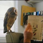 Mit olvasol?