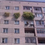 Vajon mit ültetett az ember?