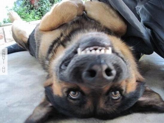 mosolygos kutyus