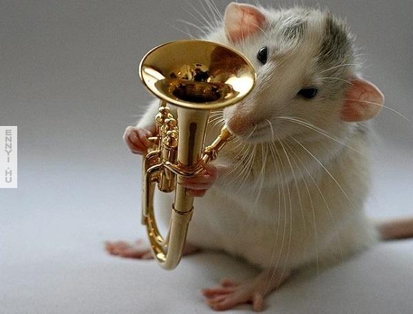 muzikalis patkany pajti