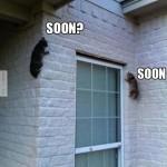Nindzsa macskák