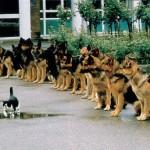 Önuralom vagy bátorság?