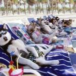 Kutya meleg van…