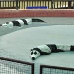 Panda krodokilok