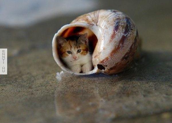 pici a cica vagy nagy a csigahaz