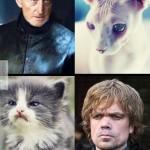 Ilyenek a sztárok, ha macskák lennének