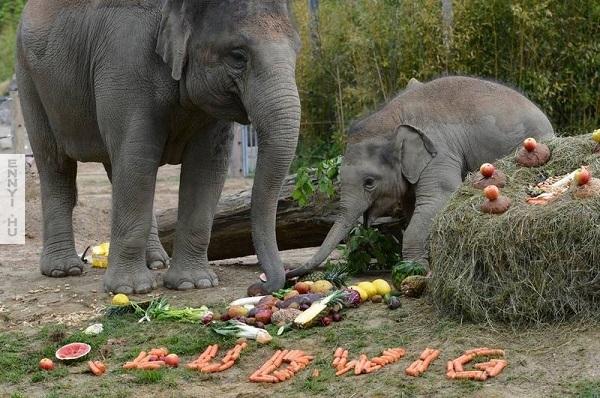 szuletesnapelefantoknak