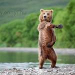 Táncolunk?