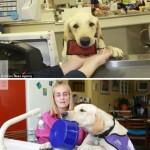 Az igazi segítség a mozgássértültnek a kutya