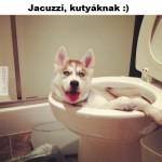Jacuzzi kutyáknak, olcsón :)