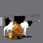 Így fogy a bociból a tej fejés közben :D